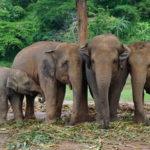 Elephant Nature Park &#8211; 最終回 <<その4:メッセージ>>