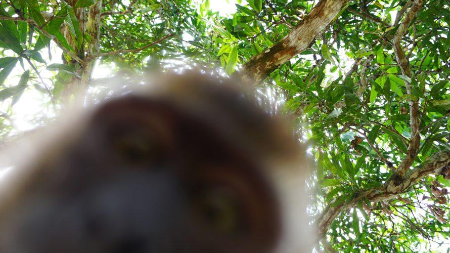 ティオマン島その2 お猿の赤ちゃんと猫の赤ちゃんに出会った