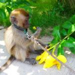 ティオマン島 その3  お猿とお散歩&苦行