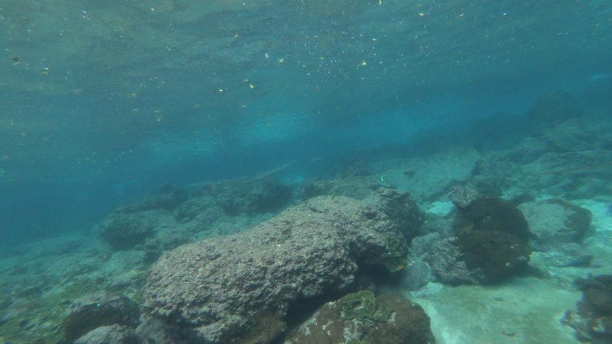 ピピ島 その5 ダイビングでサメ達に出会う