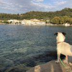 ギリシャ タソス 編 4 保護犬アラビ、初めての海