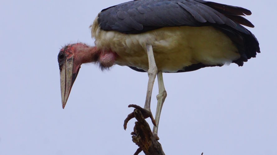 アフリカで一番快適なサファリ、クルーガー国立公園(前編)